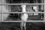 Photo(s) d'un jour : «Derrière les barreaux» et «Beau gosse» (par Den's)