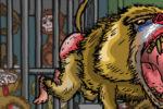 Coming Soon : Le Babouin Dingo, le premier magazine BD de Foutou'art Editions!